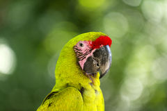 Green parrot outdoor Stock Photography