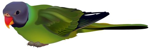 Green Parrot Stock Images