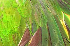 Green parrot's feather Royalty Free Stock Images