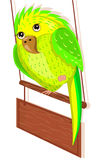 Green parrot sitting on the perch Royalty Free Stock Images