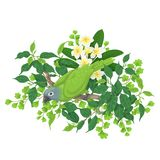Green Parrot on Tree Branch. Green parrot sitting on tree branch. Leaves and flowers of tropical plants and bird  on white.Vector flat illustration Royalty Free Stock Image
