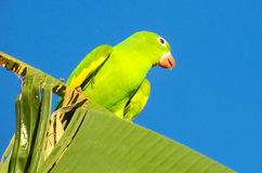 Green parrot on the tree stock photography