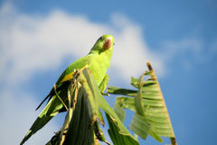 Green parrot on the tree stock photo