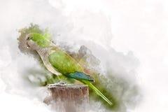 Green parrot, watercolor. Green parrot on Fuerteventura, digital watercolor illustration Stock Image