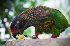 Green parrot. Wildlife in Bali birds and reptiles park Royalty Free Stock Photo