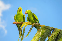 Green parrots on tree stock photography