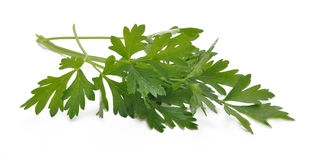 Green parsley Stock Images