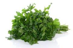 Green parsley Stock Image