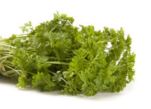 Green Parsley. Fresh Green Parsley  on White Background Stock Photography