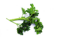 Green parsley. On a white background Royalty Free Stock Photos