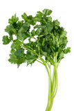 Green parsley bunch Stock Photo