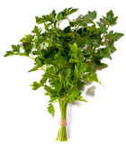 Green parsley Stock Photography