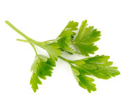 Green Parsley Isolated on White Background Stock Photos