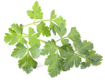 Green parsley isolated on a white background. Royalty Free Stock Photography
