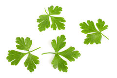 Free Green Parsley Leaf Isolated On White Background. Top View Stock Photos - 95714403