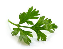 Green parsley leave Stock Image