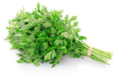 Green parsley leaves bunch Royalty Free Stock Photo