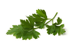 Green parsley leaves Stock Image