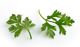 Green parsley leaves Stock Photography