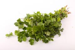 Green Parsley Pack. On white background Stock Image