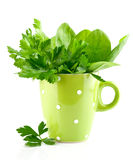 Green parsley and spinach in cup Royalty Free Stock Photography