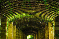 Green passage in Athens, Greece. Detail of green passage in Athens, Greece Royalty Free Stock Image