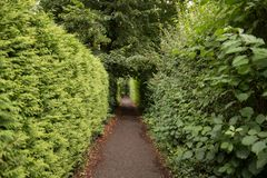 Green passage way with cupressus tree. Beautiful passage way trough park. Secret, mysteruous Green park path stock photos