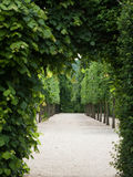 Green passageway Stock Images