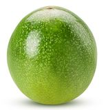 Green passionfruit stock image