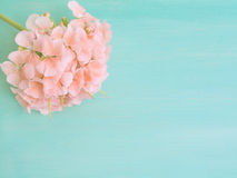 Green pastel background with a pink geranium Stock Photo
