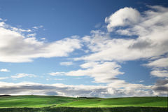 Green Pasture. In New Zealand royalty free stock photos