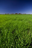 Green Pasture. 2/3 green pasture with 1/3 blue sky royalty free stock photos
