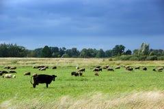 Green pasture Royalty Free Stock Image