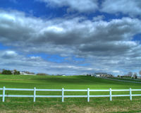 Green Pasture. A picture of a green pasture Royalty Free Stock Images