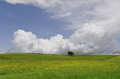 Green pasture Royalty Free Stock Photos