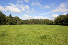 Green pasture. Rural landscape with white clouds in a blue sky over a lush green pasture surrounded by a mixture of deciduous trees and conifers royalty free stock images