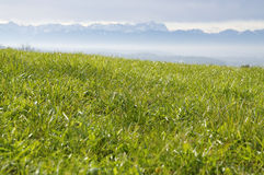 Green Pasture in the Alps Royalty Free Stock Images