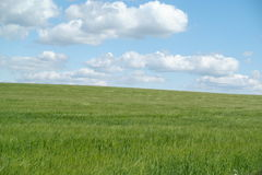 Green pasture with blue sky. Green grassy field with blue sky and clouds overhead Royalty Free Stock Photo