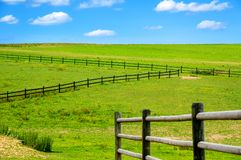 Green pasture with blue sky stock photo
