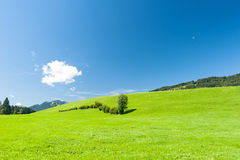 Green pasture. With blue sky in Southern Germany stock image