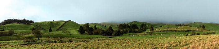 Green pasture on hillside. Panorama of green pasture with morning fog Stock Photography