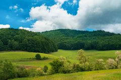 Green pasture before a forest. Green pasture leading to a thick green forest somewhere in eastern Europe Stock Photography