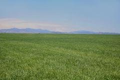 Green pasture overlooking the mountains Royalty Free Stock Photos