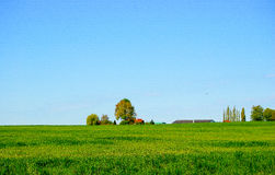 Green pasture Stock Photography