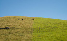 Green pasture on Sao Jorge Stock Images