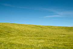 Green pasture scene Stock Photography