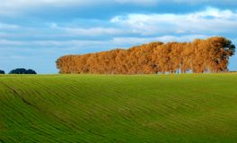 Green pasture and trees Stock Photo