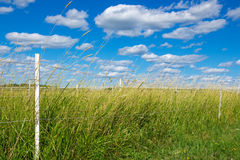 Green pasture under the blue sky royalty free stock photography