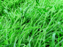 Green Pastures. Green grass, pastures and weeds royalty free stock image