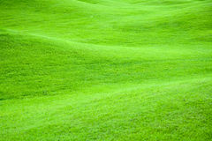 Green pastures 2 royalty free stock image